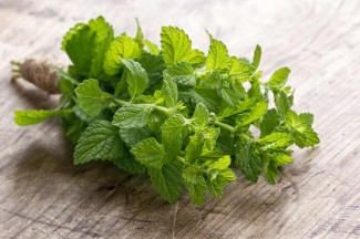 Mint popular in a medieval salad