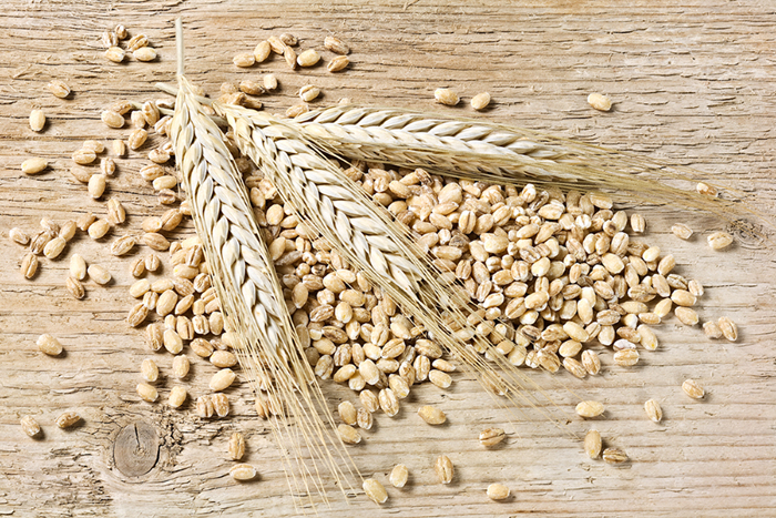 Barley For Flour Used In Bread Making