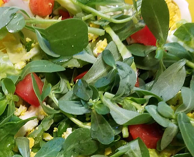 Fresh purslane in a salad