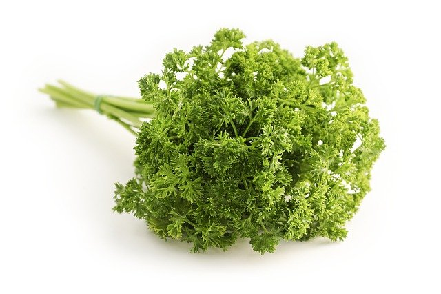 Fresh parsley used in medieval banquet recipes